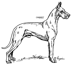 Two Boxer Dogs Coloring Pages