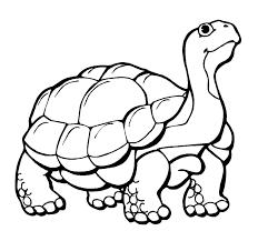 Schildpadden Vind En Print Bliksemsnel Een Kleurplaat Ukkonl