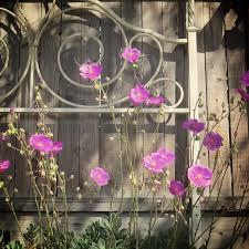 carmel garden inn. carmel garden inn