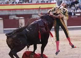 bull fighting injuries. Simple Fighting 16  Bullfighting Mishaps WARNING GRAPHIC Throughout Bull Fighting Injuries I