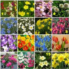 english garden flowers. Quiz Rating Details English Garden Flowers H