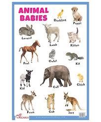 Animal Babies Educational Chart