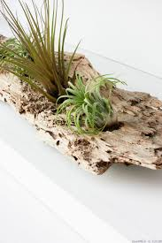 a diy driftwood air plant holder is a creative way to use driftwood from the beach