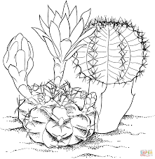 Gymnocalycium Mihanovichii Hibotan Cactus Coloring Page