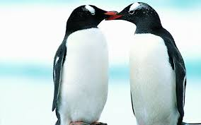 penguin love wallpaper. Beautiful Love Beautiful Penguin Wallpaper To Love U