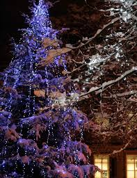 outdoor tree lighting ideas. Valuable Christmas Tree Outdoor Lights Light Ideas Inspiration Lighting