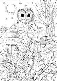 Small Picture Northern Spotted Owl Coloring page corujas desenhos Pinterest