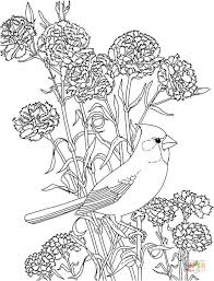 Small Picture Red Carnation and Cardinal Ohio State Flower and Brid coloring