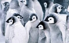 penguin desktop wallpaper. Unique Penguin Penguin Family In Desktop Wallpaper N