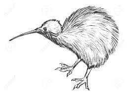 キウイ鳥の描かれたイラストを手します