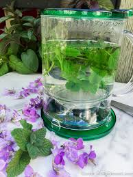 however that doesn t mean you can t use fresh herbs in fact if i have just a small handful of herbs i ll happily turn them into a cup of herbal tea