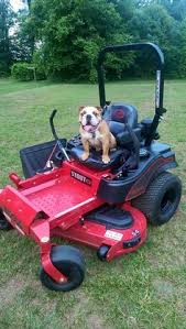 big dog diablo. every big dog is proudly built in the usa! | mower co. graphics and images pinterest cani, cani enormi e usa diablo