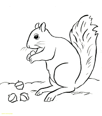 Depositphotos 163576284 Stock Illustration Cute Squirrel Coloring