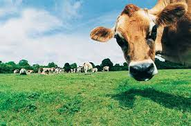30 Cows In A Field, How Many Didn't Riddle Answer