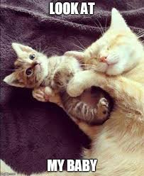 image ged in cats funny cats kitten