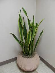 Indoor+House+Plants | Re-Potting Indoor Plants | What Grows There ...