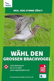 Ihr wollt wissen wie der vogel des jahres 2021heißt, das ist noch immer nicht raus. Vogel Des Jahres 2021 Moorhus Nabu Besucherzentrum