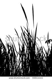 tall grass silhouette. Realistic Grass Silhouette (Vector Illustration).Eps10 Tall L