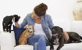 The Benefits Of Being A Pet Sitter Blog Petcloud