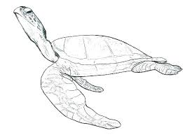 Sea Turtle Coloring Page Coloring Pages Of Sea Turtles Coloring