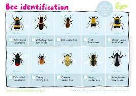 Bee Identification Chart Uk Bee Identification Sheet Bee Identification Types Of Bees