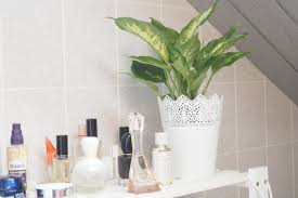 Pflanzen Im Badezimmer Tipps Für Mehr Grün Im Bad