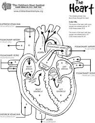 Small Picture Sensational Design Human Heart Coloring Pages Human Heart