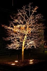 landscape lighting trees. lighting for specimen tree landscape trees u