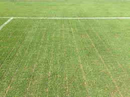 Synthetic v Grass The Numbers Growing Green Grass