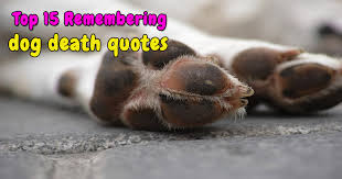 Top 40 Remembering Dog Death Quotes My Loving Dog Unique Dog Death Quotes