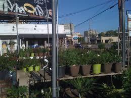 dan west garden center 4763 poplar ave memphis tn 38117