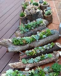 Small Picture Download Succulent Gardens Ideas Solidaria Garden