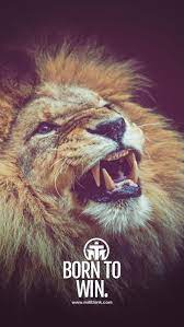 Motivational Quote, animals, king, lion ...