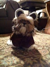 diy ewok dog costume korrectkritterscom
