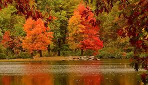 Autumn Trees Nature Fall Hd Wallpaper ...