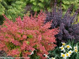 the best low maintenance plants for