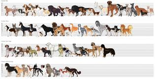 Big Dog Size Chart