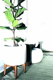 inside plant stand hanging indoor house stands plus garden holders bunnings nz