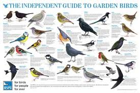 Bird Identification Chart The Independent Guide To British Birdlife The Independent