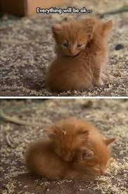 cute kittens quotes for kids. Wonderful Quotes Sleeping Cat  Advantage For Cats Kitty What Kind Of Do I Have  Why Are Better Than Dogs Pics Health At Work  In Cute Kittens Quotes For Kids