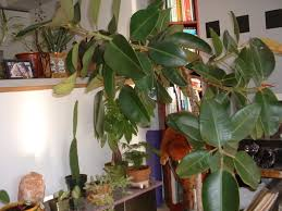 ... Cool Home Interior Accessories With Tree Like House Plants : Cool Image  Of Accessories For Home ...