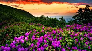 hd wallpaper nature spring. Exellent Spring Beautiful Nature Spring 1920X1080  Intended Hd Wallpaper Nature Spring N