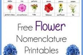 flower nomenclature printables montessori flowers names and pictures a z pdf