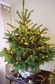 Weihnachtsbaum Aus Tannenzapfen Basteln
