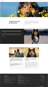 Dog Web Design Dog Breeder Web Design Breedpost Blog
