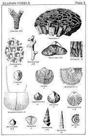 Dinosaur Crinoid Silurian amp; Fossil Minerals Fossils Fossils