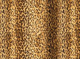 Leopard Print Bedroom Wallpaper Cheetah Print Wallpaper For Bedroom Giraffe Print Clipart Bedrooms