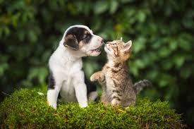Best <b>Cute Pet</b> Names for 2020 | Reader's Digest