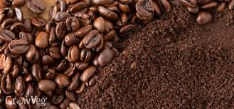 If you enjoyed the video please give it a like & subscribe so that you never miss an upload! A Common Sense Guide To Using Coffee Grounds In The Garden