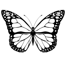 Butterfly Outline Butterfly Drawing Clip Art And Butterflies On